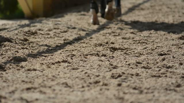 Horse in field 2