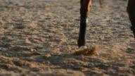 Cavallo nel campo 4
