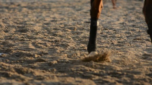 Horse in field 4