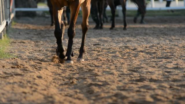 Horse in field 5