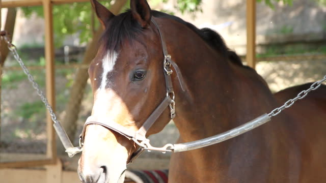 CU TU TD  Horse in stable shaking head at flies / Los Angeles, CA, United States