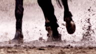 Horse is running in the rain