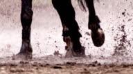 Cavallo in esecuzione in the rain