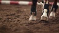 Tiro cavallo la sabbia mentre corri