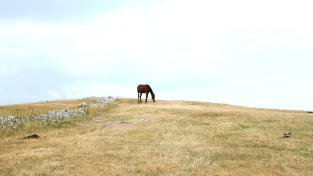Horse pasturing on the meadow
