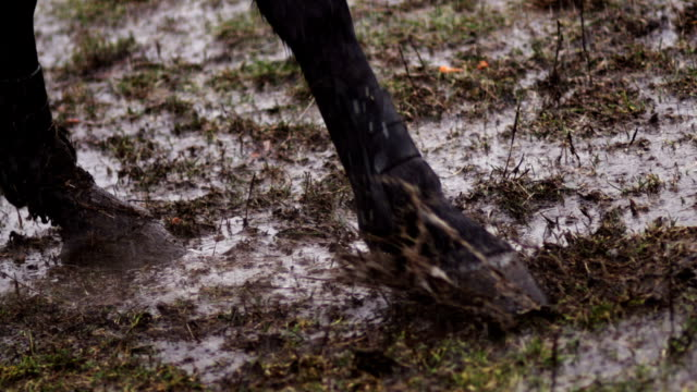 Horse pawing the ground