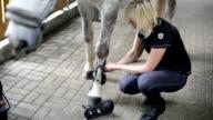 Protezione di cavallo