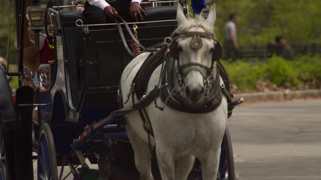Horse pulls a coach through Central Park