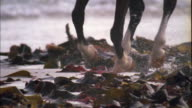 Horse running through kelp on beach, Muizenberg, South Africa Available in HD.