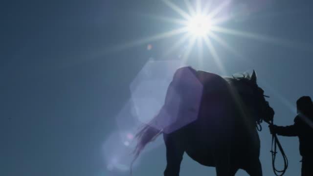 Horse Silhoutte