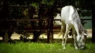 Horse, slow mo