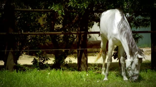 Pferd, langsam, mo