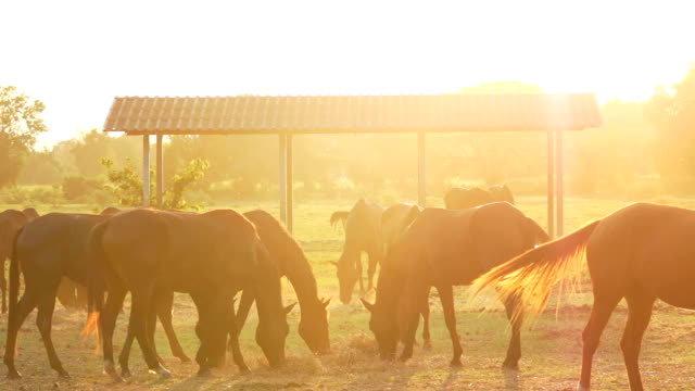 MONTAGE Horse