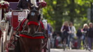 Horse wearing white and red feathered harness pulls carriage in Central Park in slow motion