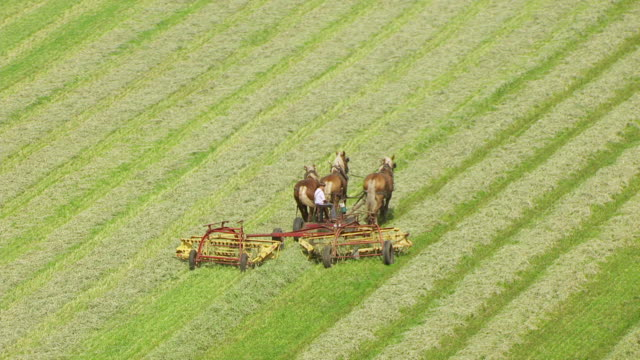 Elkhart (IN) United States  city photos : ... Horses cutting grass in farm / Elkhart County, Indiana, United States