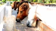 Pferde Essen Heu auf dem Bauernhof