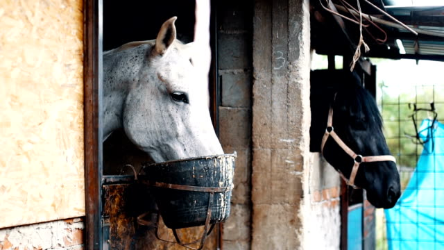 Horses eating in stables