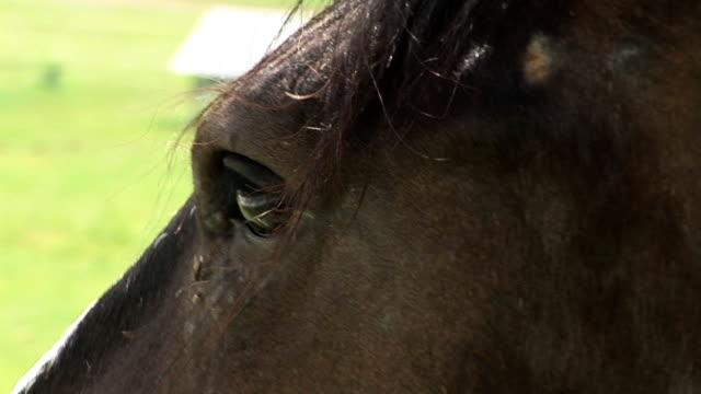 HD: Auge des Pferdes