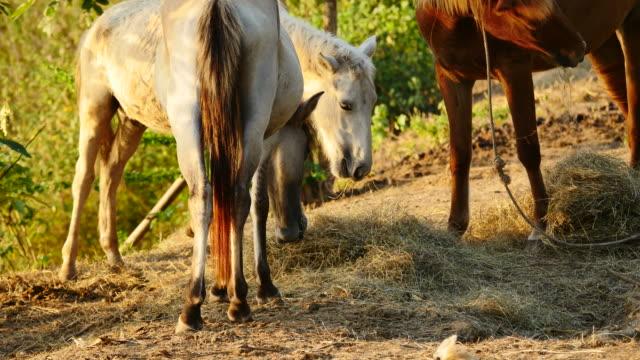 Horses feeding.