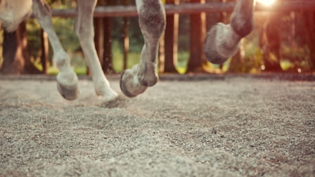 SLO MO Horse's hooves in canter at sunrise