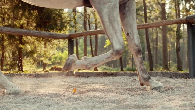 SLO MO LD paard hoeven in galop beweging