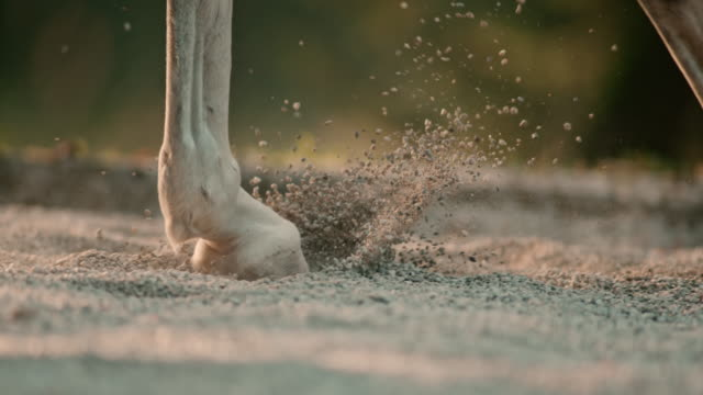 SLO MO DS Horse's hooves lifting sand