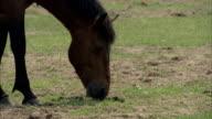 Horses In Cape Toi, Japan