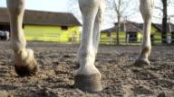 Cavallo di close-up di gambe