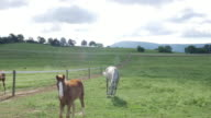 Horses on the ranch in America