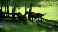 Horses pasturing on the meadow