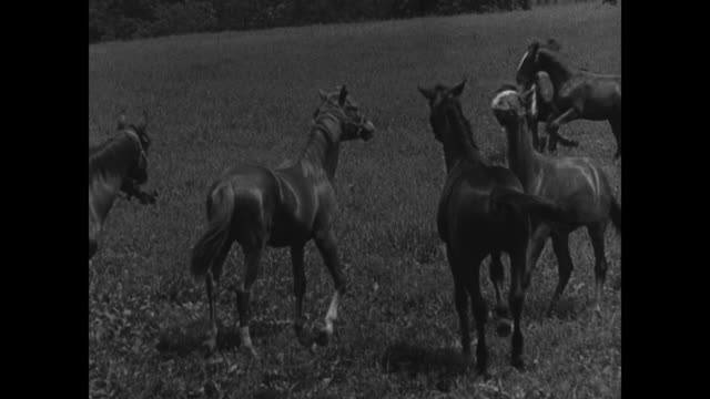 Horses playing in pasture Man O' War running in pasture alone JOCKEY CLUB Board members standing at track talking