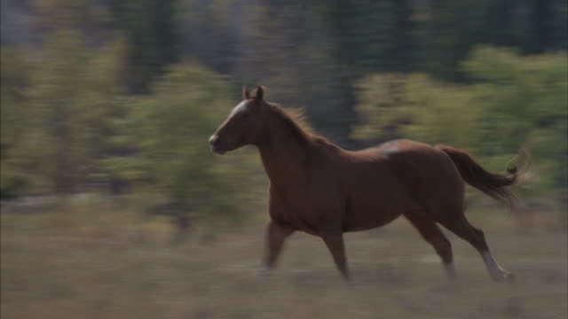 Horses run across an open field.