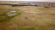 Horses run over the prairies in the Badlands.