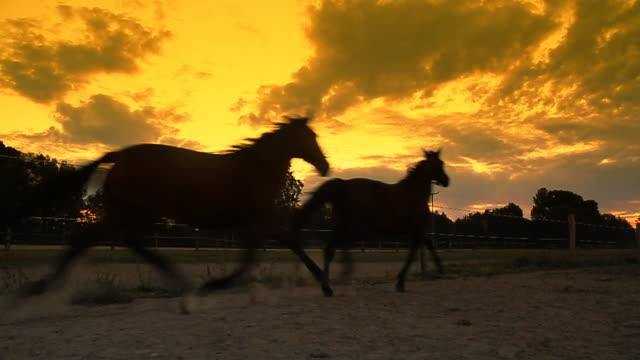 HD SLOW MOTION: Horses Running At Dawn