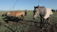 Horses standing in line tied to a wire