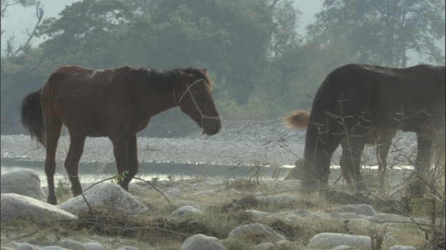 Horses step over rocks, Chilla sanctuary, India Available in HD.