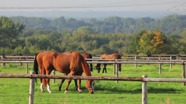 CRANE DOWN: Horses