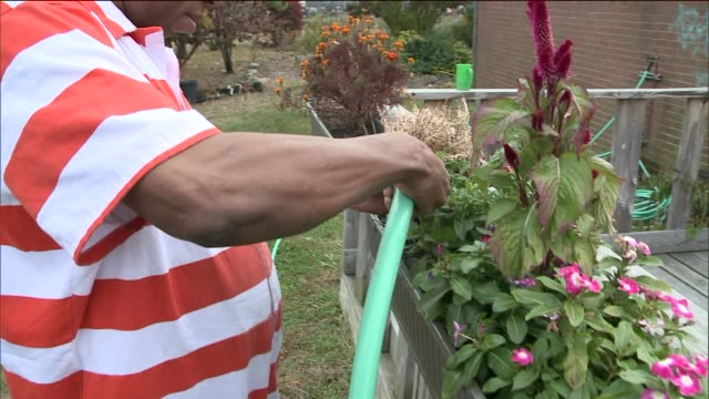 Horticultural Therapy for Inmates at Rikers Island Correctional Facility A Inmate Waters Flowers at Rikers Island Garden at Rikers Island on November...