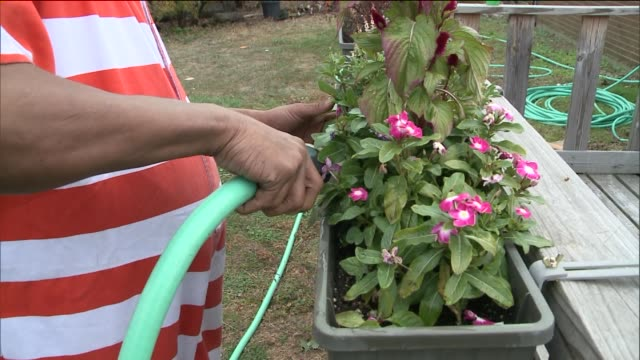 Horticultural Therapy for Inmates at Rikers Island Correctional Facility A Rikers Inmate Waters Flowers in Jail Garden at Rikers Island on November...
