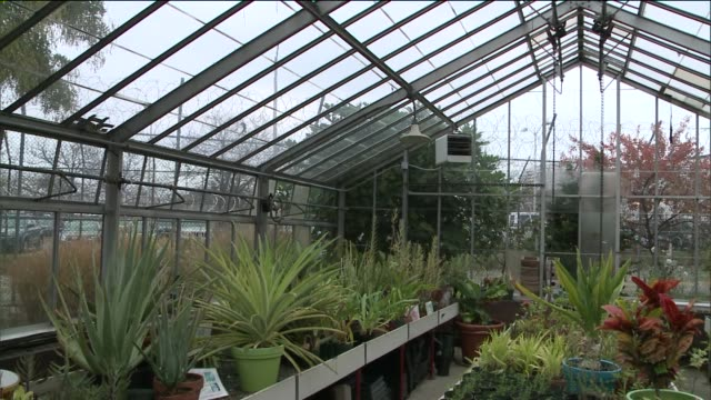 Horticultural Therapy for Inmates at Rikers Island Correctional Facility Inside a Green House at Rikers Island Prison at Rikers Island on November 04...
