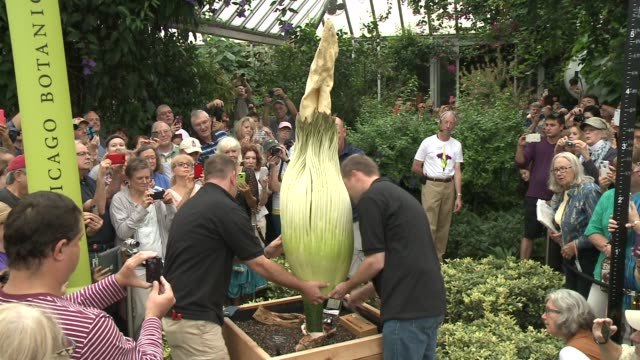 WGN Horticulturists said Spike the Chicago Botanical Garden's corpse flower didn't have enough strength to open on its own A twoman team cut open the...