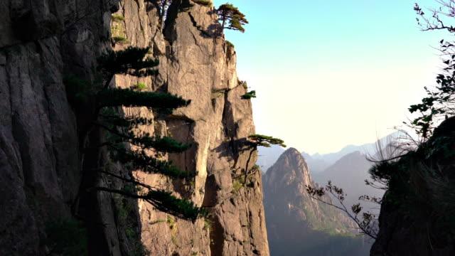 Huangshan gula bergen i Kina-träd som växer på berget