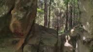 Huge rock boulders in evergreen tree forest