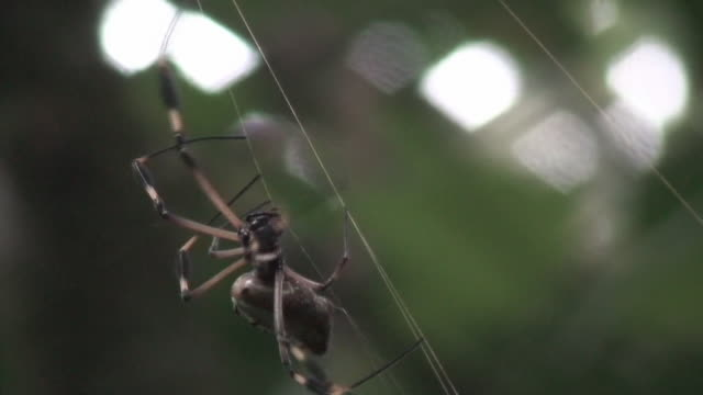 Huge spider in the rain forest