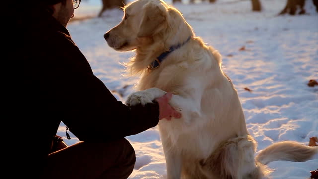 Hugging and  hand shaking between young guy and retriever dog