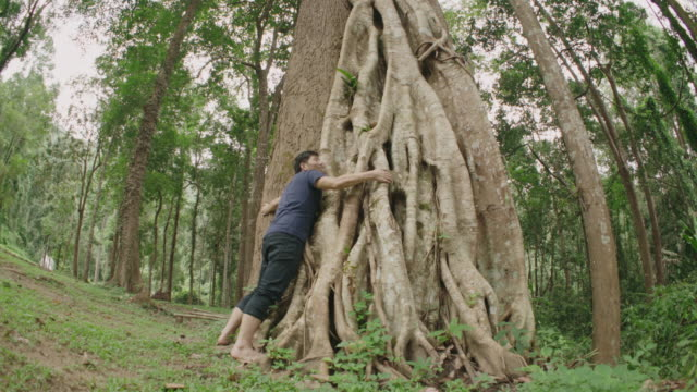 Großer Baum umarmen