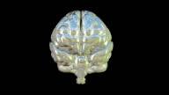 'Human Brain, animation'