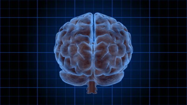 Human Brain Rotate (Loop).