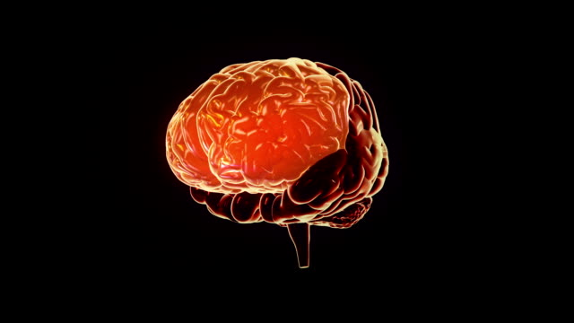 Human brain with regions lighting up. Synapsis. Loopable. Biology. Orange.