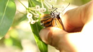 human hand catching butterfly on flowers